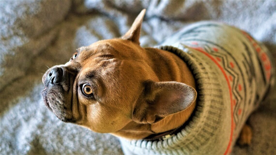 Inverno: dicas de como cuidar dos pets na estação mais fria do ano