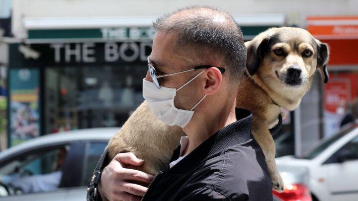 Sintomas que a Covid-19 pode causar em cães e gatos
