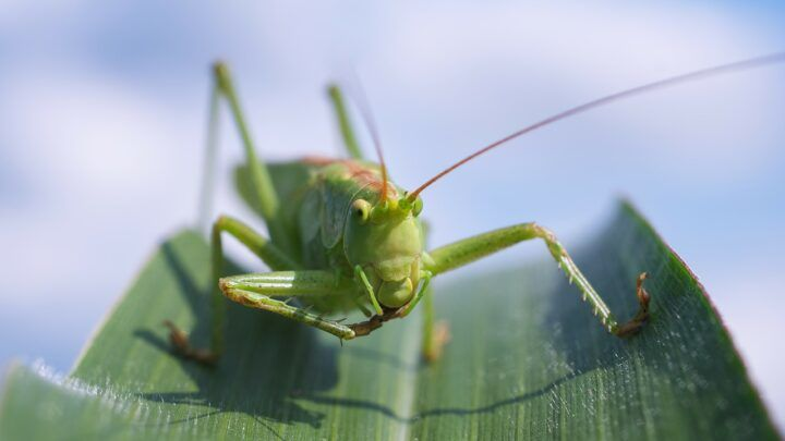 Aumento da temperatura no planeta tem efeitos sobre o metabolismo dos insetos