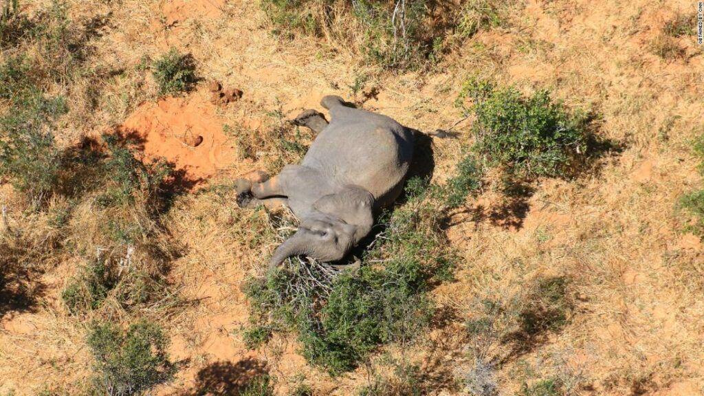 Centenas de elefantes morrem de forma misteriosa em Botsuana