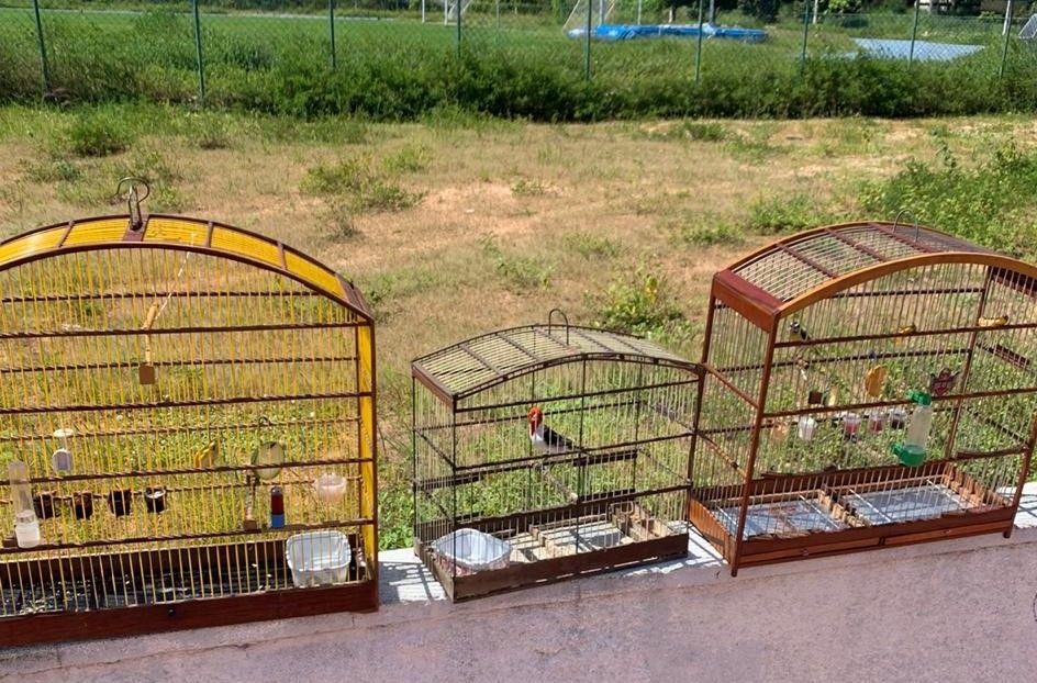 Guarda Municipal resgata pássaros nas feiras livres de Felipe Camarão e Igapó