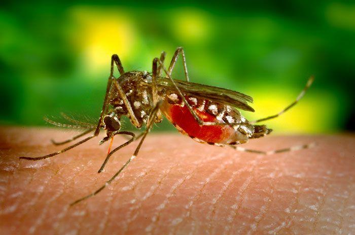Pesquisa da UFRN desenvolve produto farmacêutico para combater o Aedes aegypti