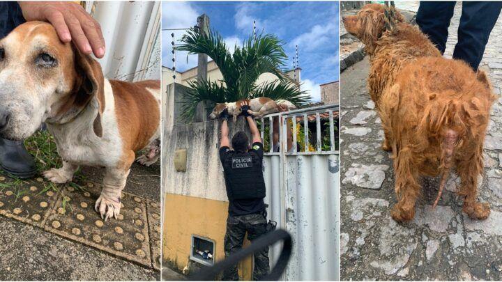 Polícia Civil resgata 3 cães em situação de maus-tratos na Grande Natal