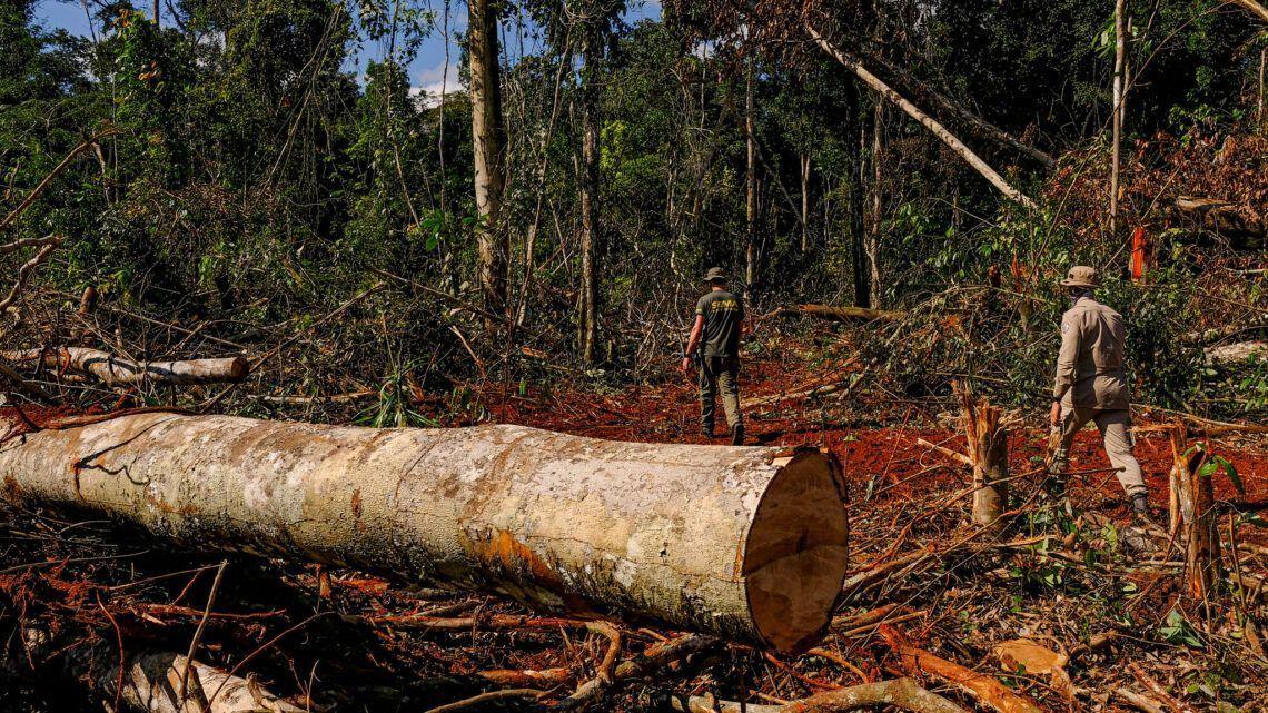 Bolsonaro quer desfazer 'visão distorcida' de política na Amazônia