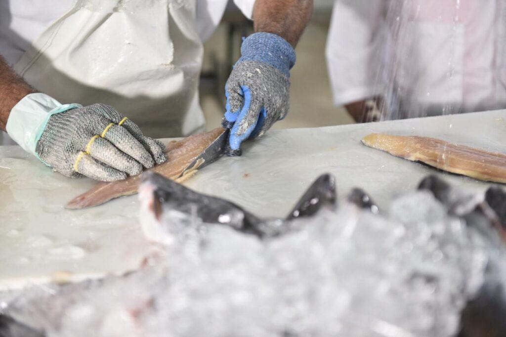 Governo do RN sanciona lei para incluir pescado na alimentação escolar