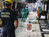 PF incinera quase 800 kg de drogas no RN