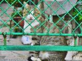 Hotéis para animais são autuados por funcionamento irregular no RN