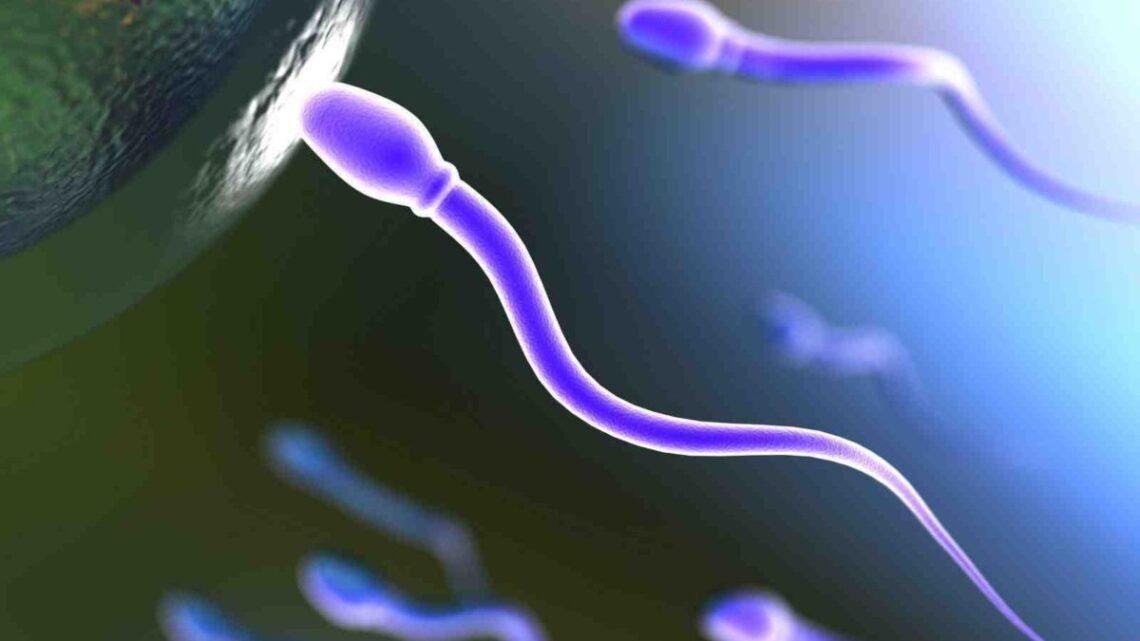O que dizem os estudos sobre infertilidade masculina após infecção grave por Covid-19?