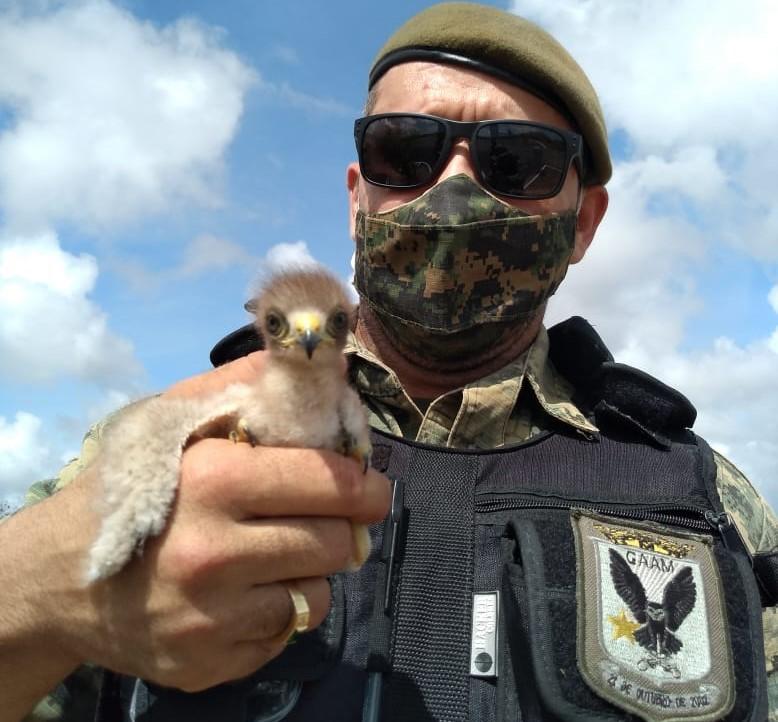Guarda Municipal resgata filhote de gavião-carijó em residência na ZN