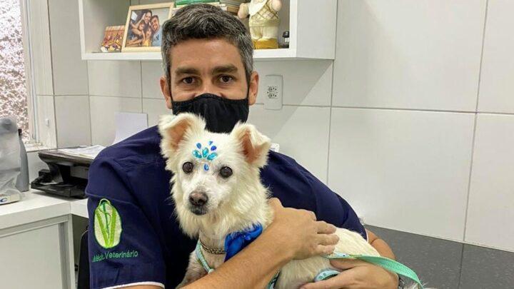 Novembro Azul: você sabia que seu pet também pode ter câncer de próstata?