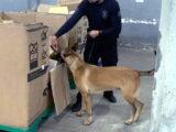 Pó via Correios PF apreende 5 kg de cocaína enviada para Natal