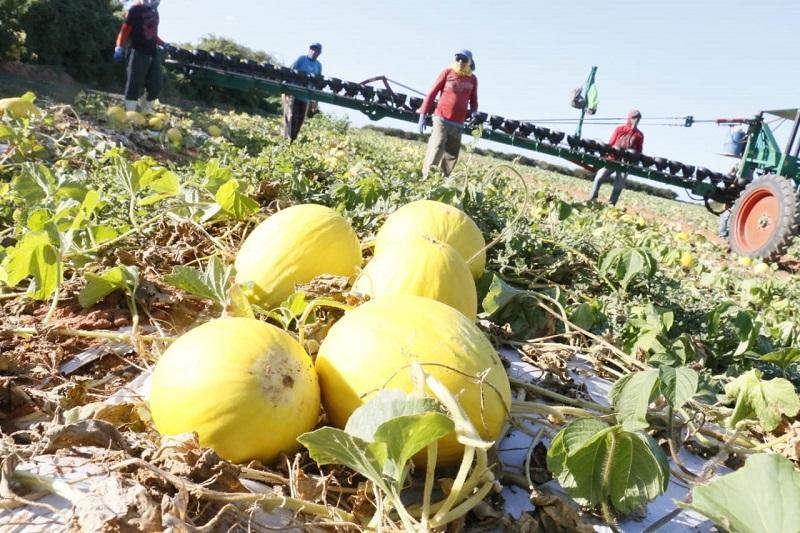 Agrícola Famosa recebe Licença de Regularização do Idema