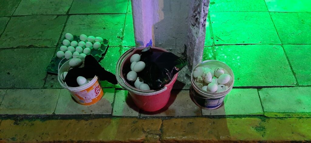 Em Natal grupo com mais de 150 baderneiros é flagrado jogando ovos na população