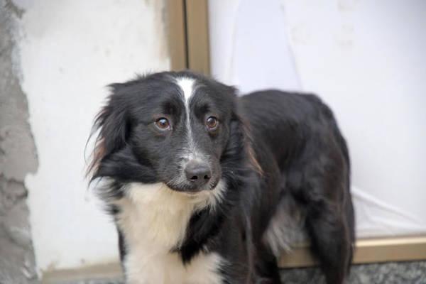 Itália cão billy espera dono internado com Covid há 2 meses