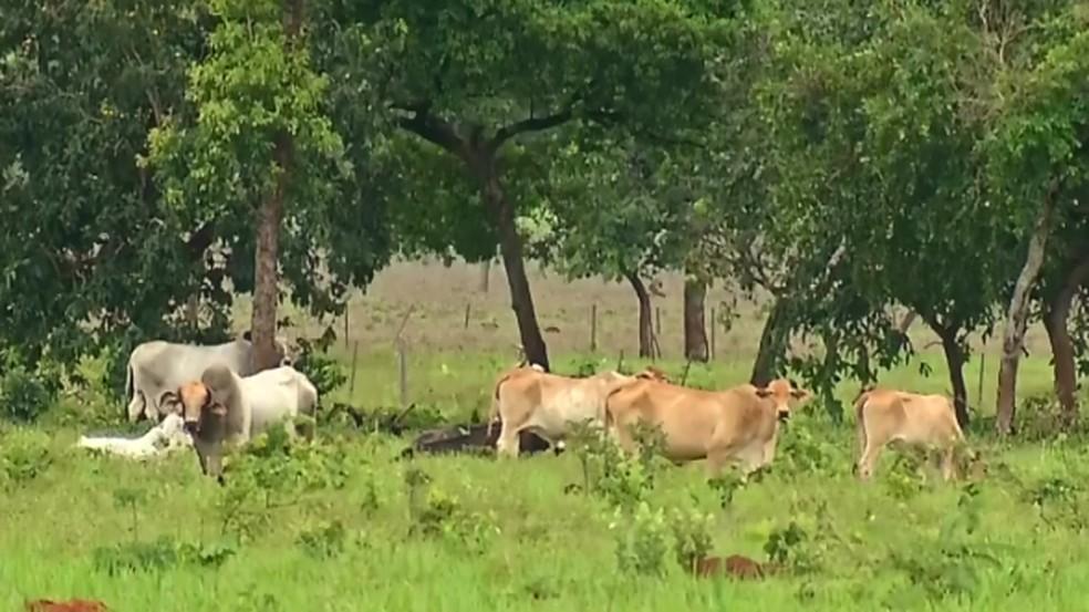 Proprietários rurais de São José de Mipibu denunciam roubos de animais
