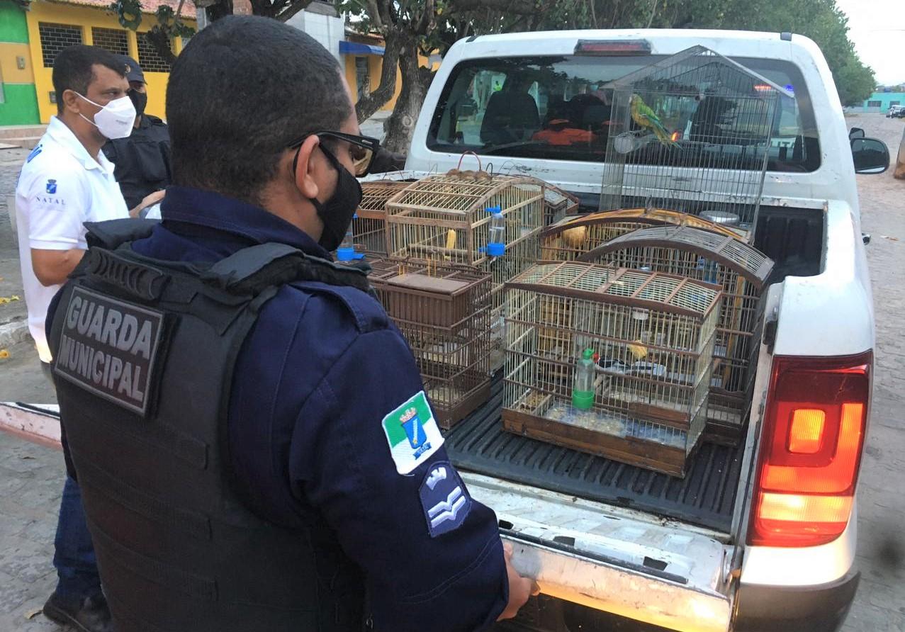Guarda Municipal resgata pássaros silvestres na zona Norte de Natal