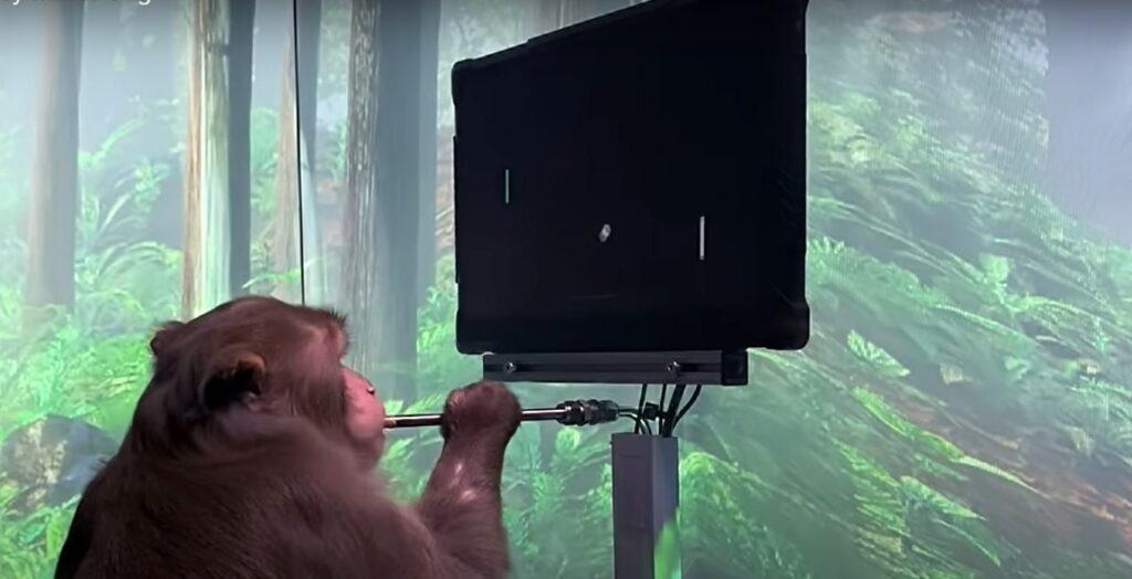 Neuralink, de Elon Musk, mostra macaco jogando com chip implantado no cérebro