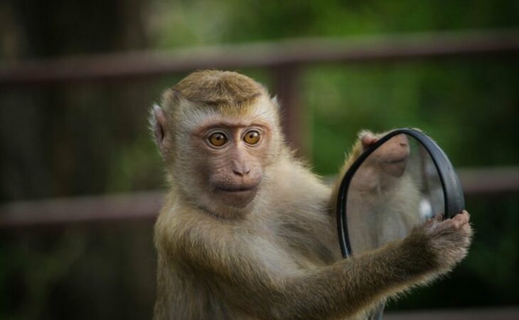 Cientistas criam embrião metade humano, metade macaco